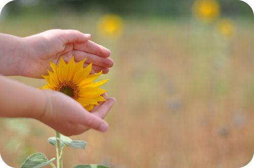Sunflowerinhands