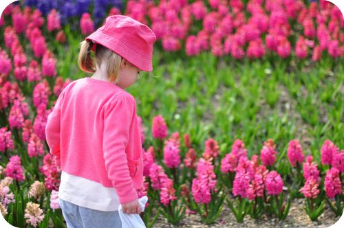 076pinkflowers