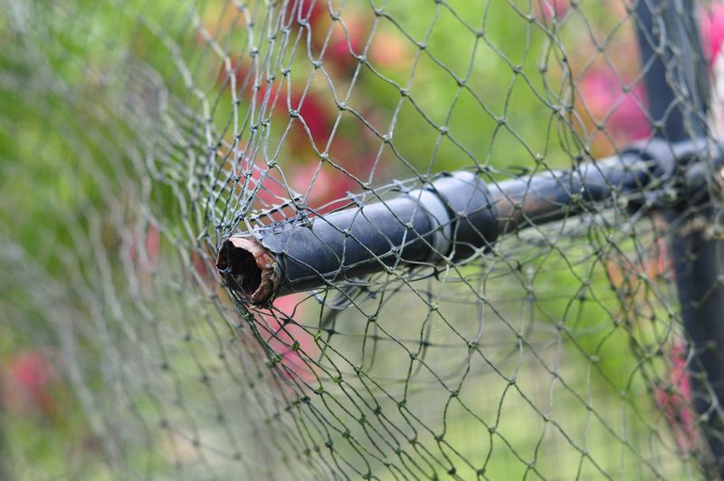 Broken fruit net poles