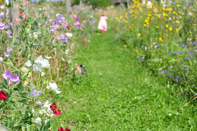 Walking among the flowers at Flowers Of Hatch