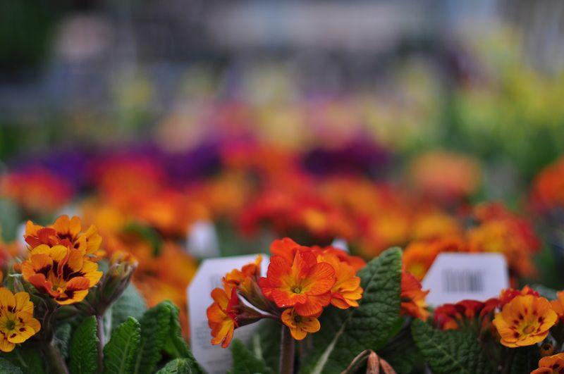 Garden centre blooms