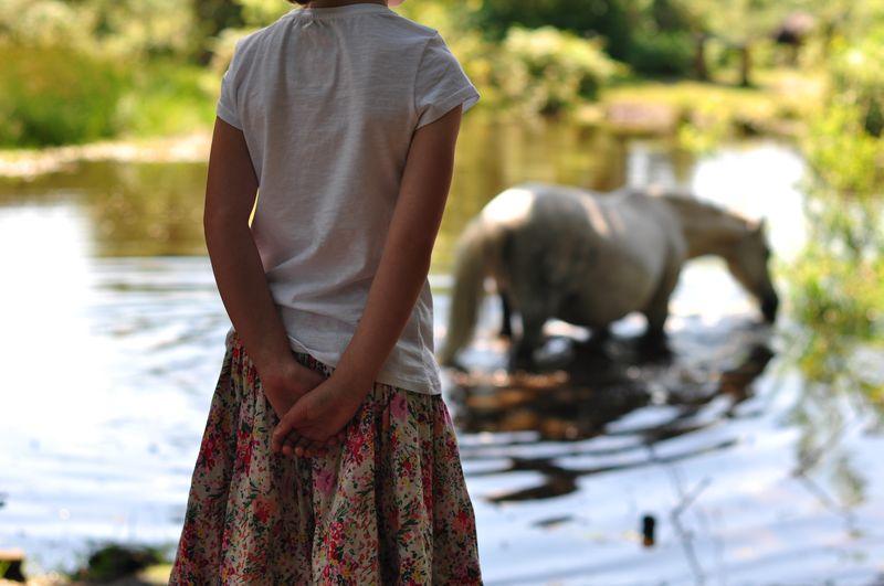 Dartmoor ponies at Rushy Pond